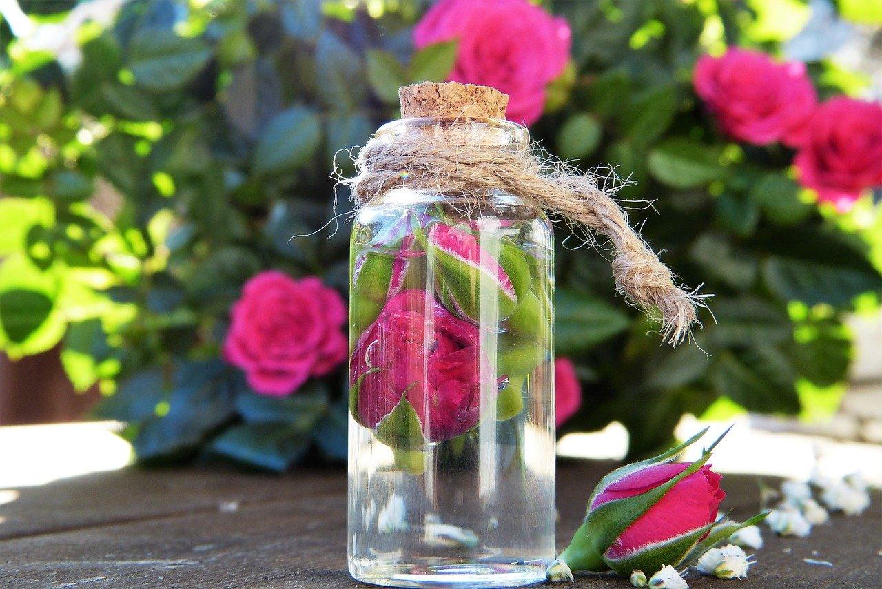 Tónico agua de rosas Beneficios y cómo hacer uno